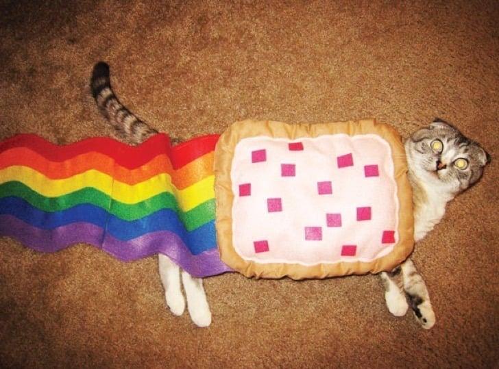 gato disfrazado de nyan cat