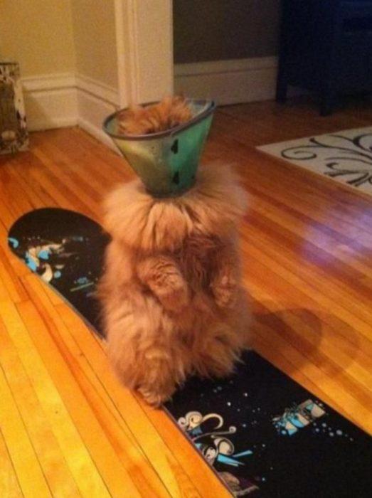 gato con cono en la cabeza