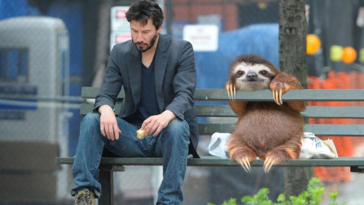 perezoso sentado al lado de un actor