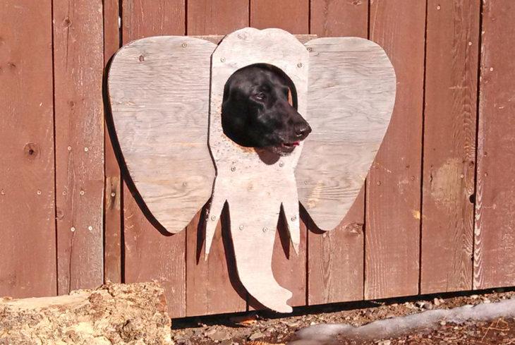 ventana de barda para perro con orejas de elefante