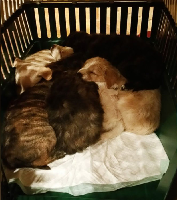 perritos dormidos