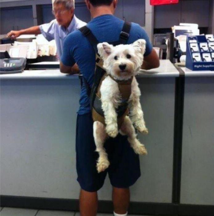 muchacho cargando perro en la espalda