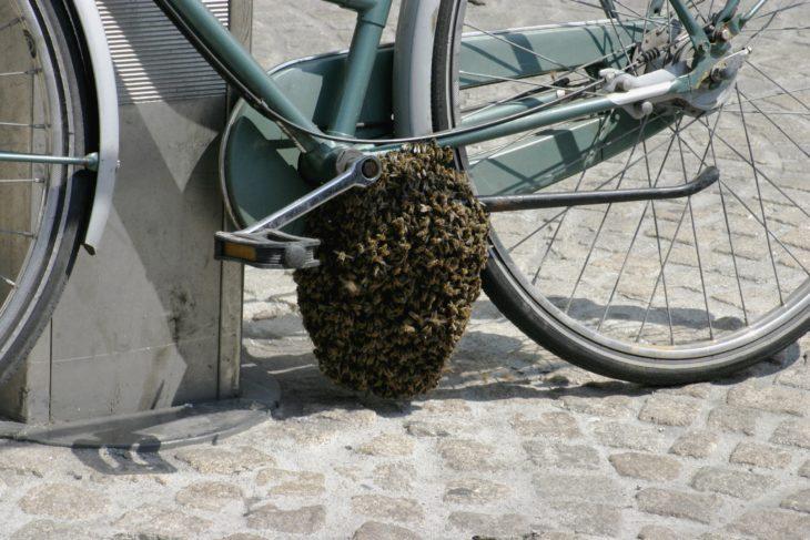 panal en bicileta