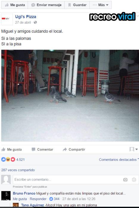 palomas en establecimiento de pizza ugi's
