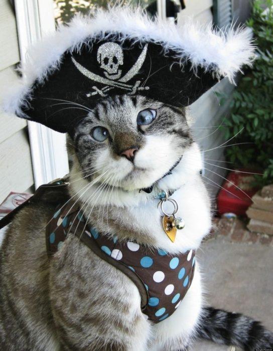 gato disfrazado de pirata