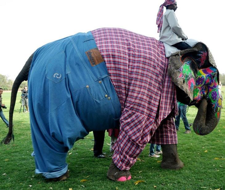 elefante con pantalón y camisa