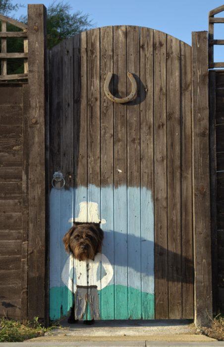 ventana para perro en una puerta