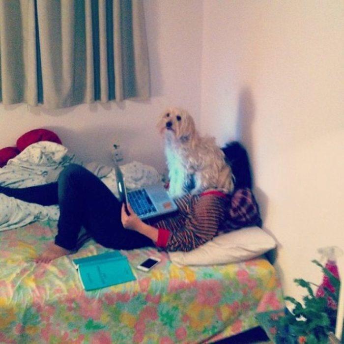 mujer en su laptop con un perro sentado en su cara