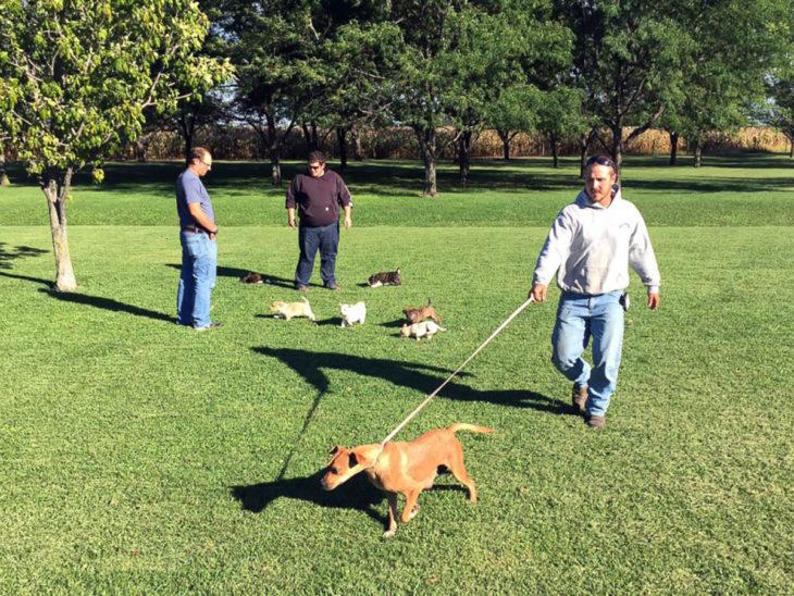 amigos paseando perros