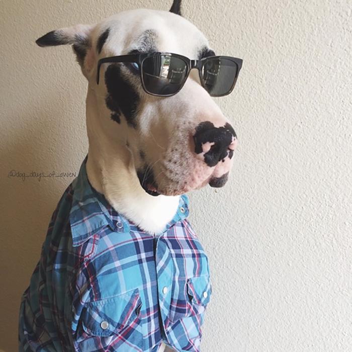perro con lentes y camiseta