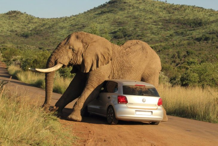 elefante sobre carro