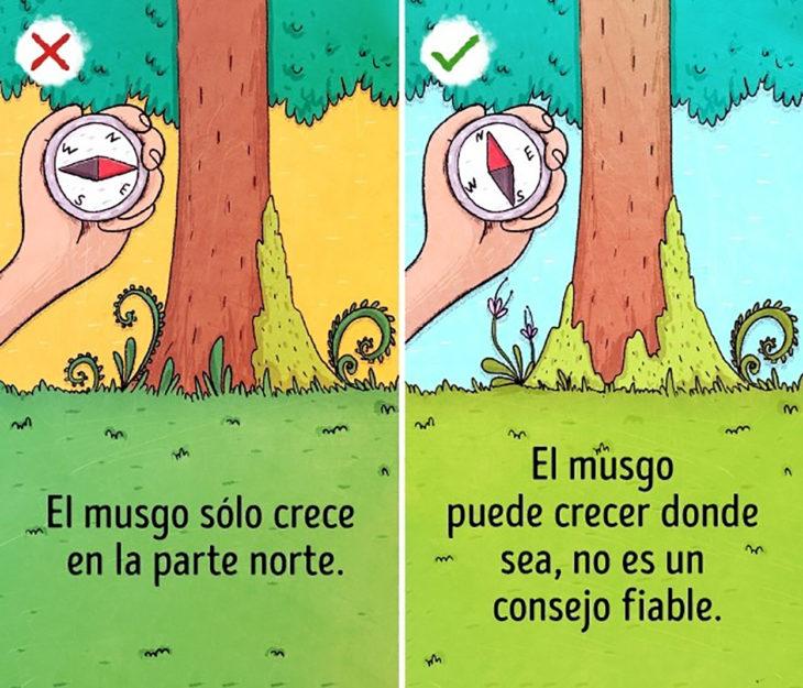 ilustración brújula y árbol