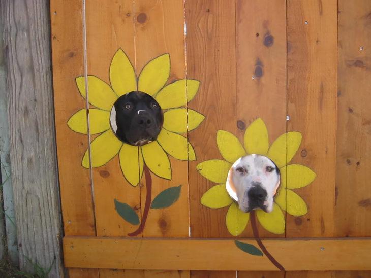 ventanas para perro pintadas de girasoles