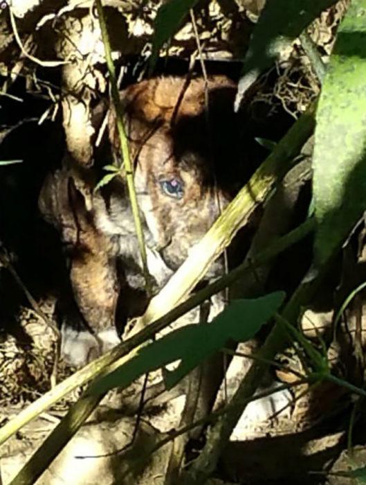 cachorrito entre el bosque