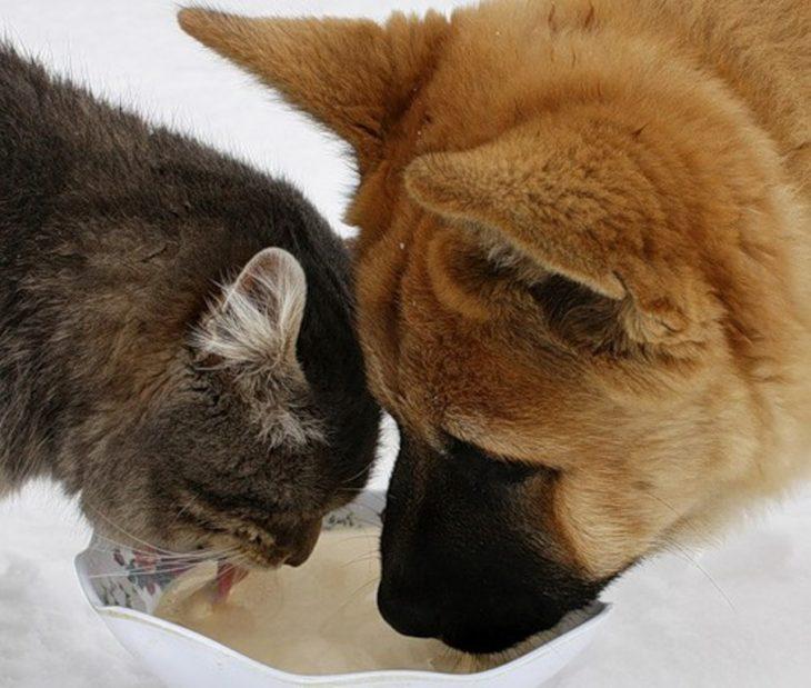 comparten comida
