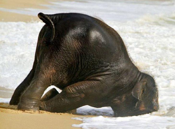 Elefante dormido a la orilla del mar
