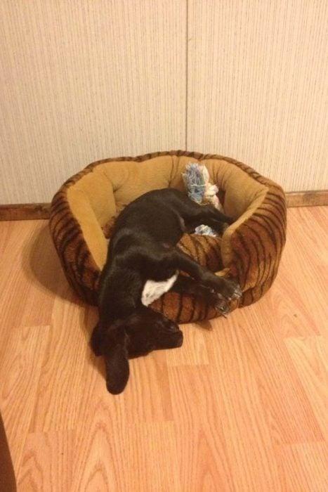 Perro dormido afuera de su cama