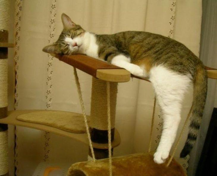 Gato dormido como tabla