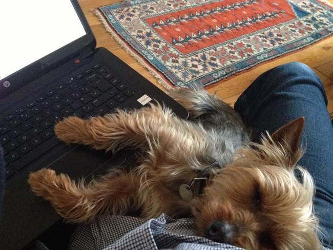 Perro dormido mientras su dueño trabaja