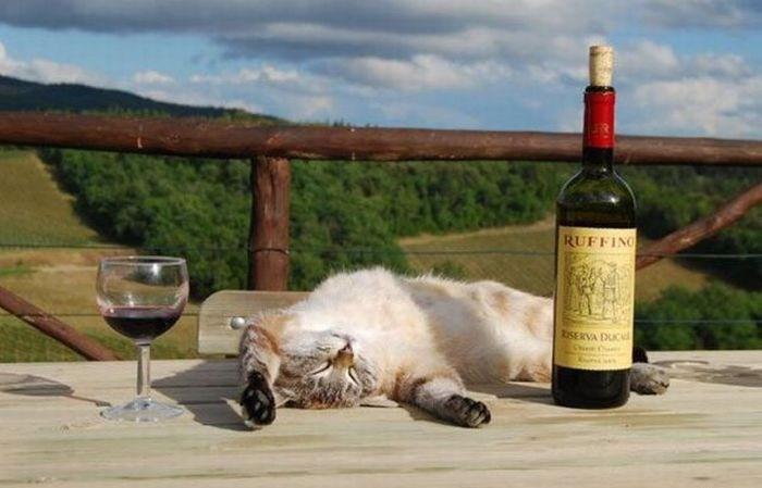 Gato dormido en una mesa al lado de una copa de vino