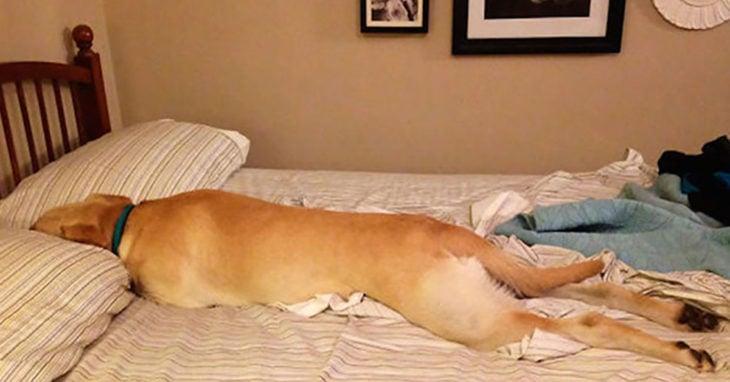 perro sumido en la cama