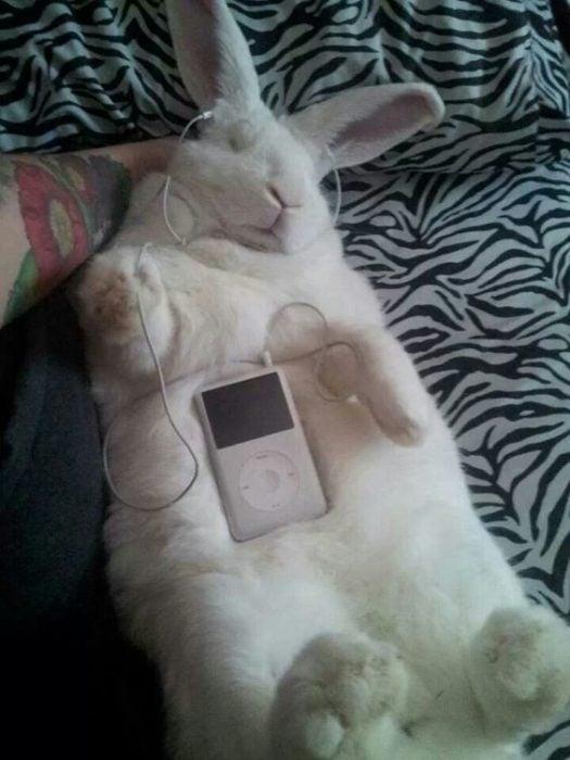 Conejo dormido escuchando música
