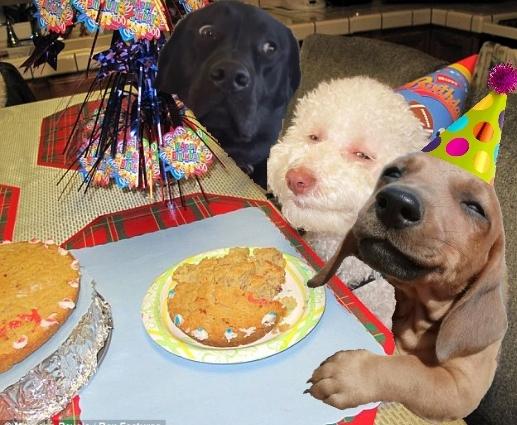 Batalla PS - perro en fiesta de cumpleaños