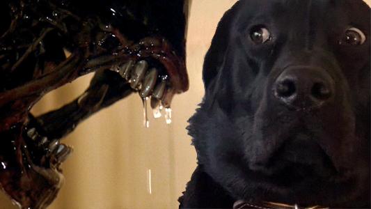 Batalla PS - perro en escena de alien