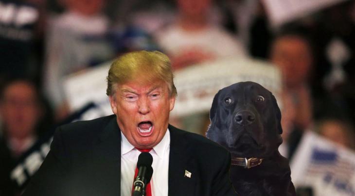 Batalla PS - perro con trump gritando