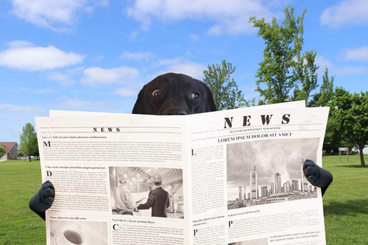 Batalla PS - perro leyendo el periódico