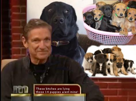 Batalla PS - perro dice que los 14 cachorros no son de él