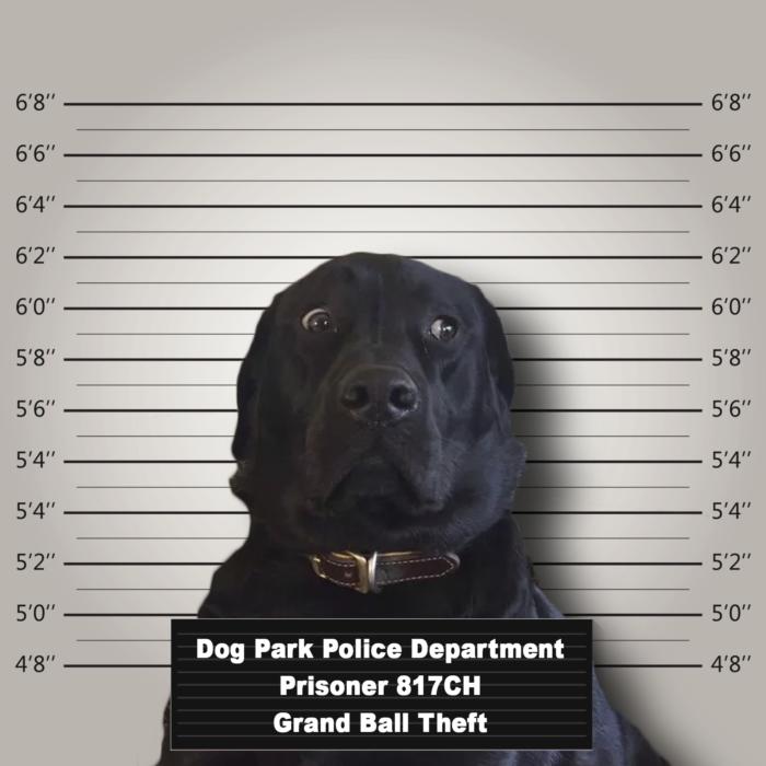 Batalla PS - perro detenido