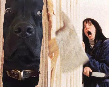 Batalla PS - perro escena película El Resplandor