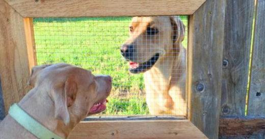 cover-perro-ventana