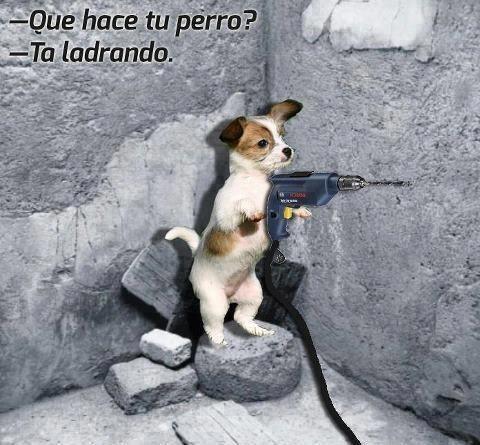 Chistes malos - perro taladrando
