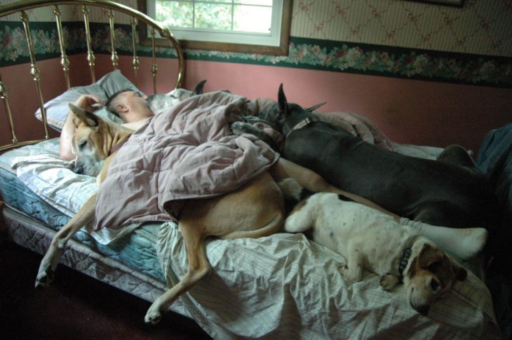 Perros acaparan la cama