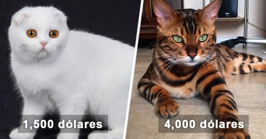 cover-gatos-caros