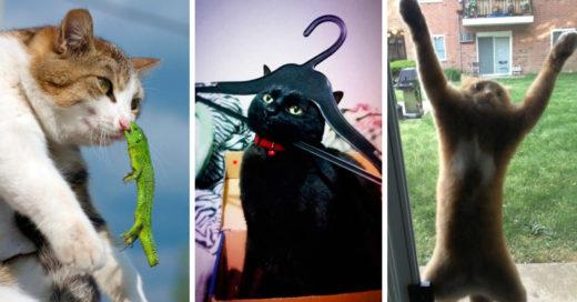 cover-gatos-tontos