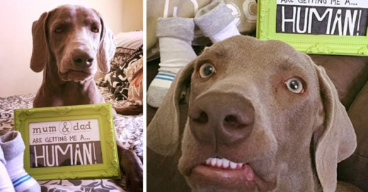 cover-perro-mi-humano
