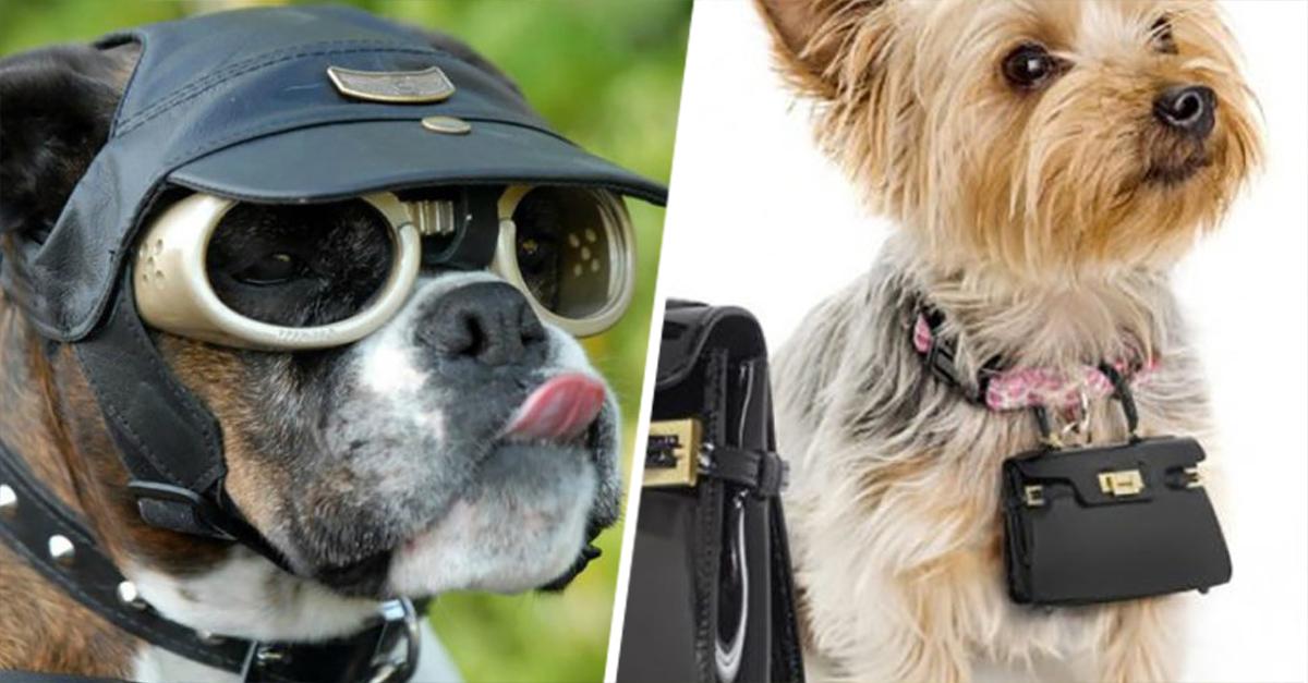 15 Productos Para Perro Que Prueban Que La Gente Esta Loca