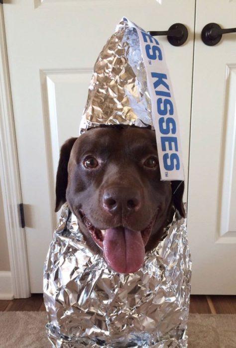 Disfraz perro Kisses