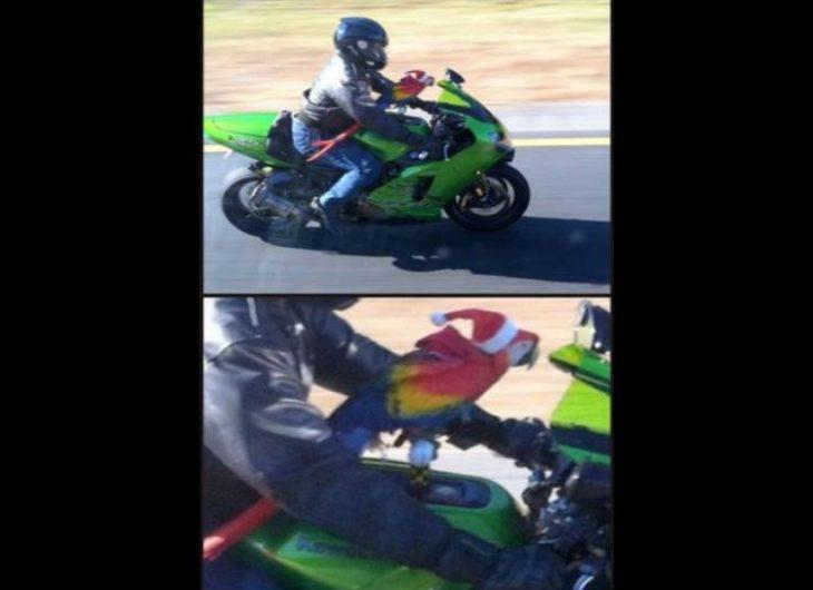 Fotos sin sentido - Motociclista con una guacamaya