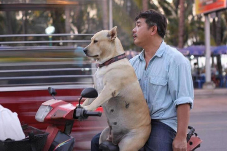 Fotos sin sentido - Perro manejando una moto