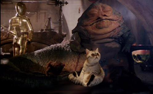 gato junto a un personajee de las guerra de las galaxias