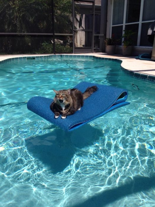 gato acuático