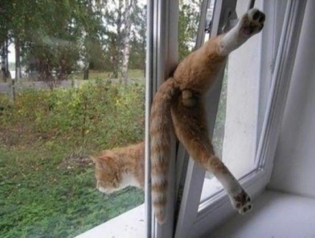 gato balet