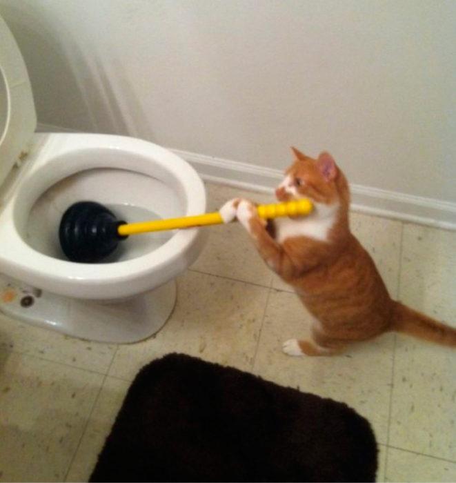 nadie me ayuda en esta casa