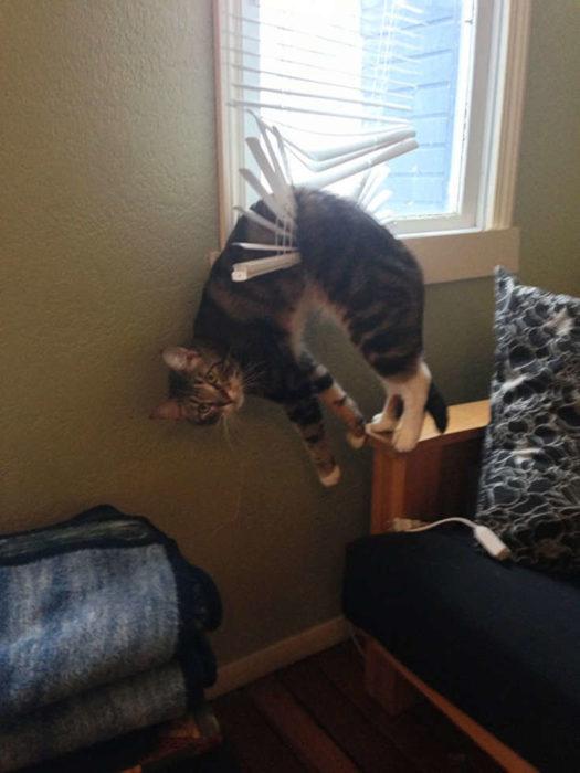 gato cortina
