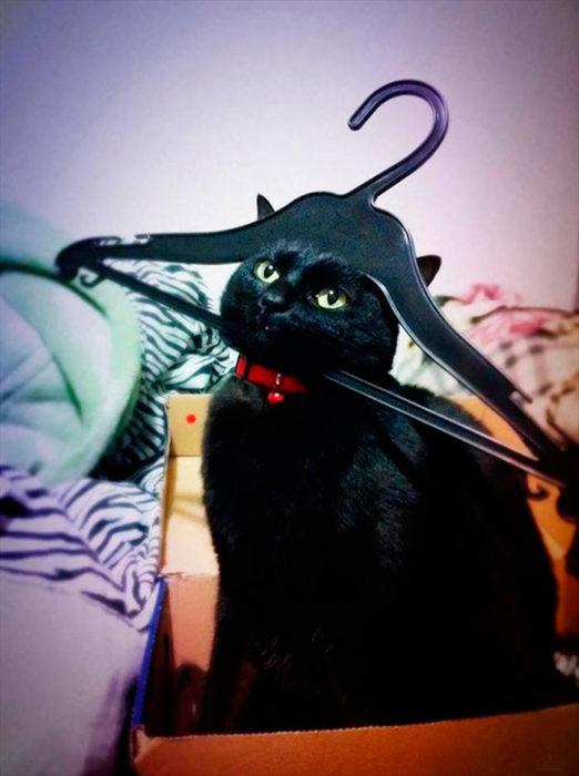 gato colgado