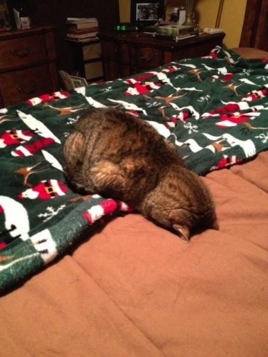 gato tirado en la cama de navidad